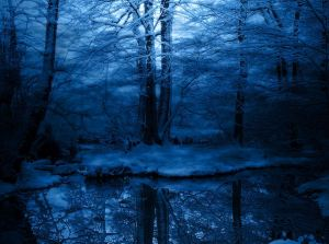 blue-winter-trees-forest